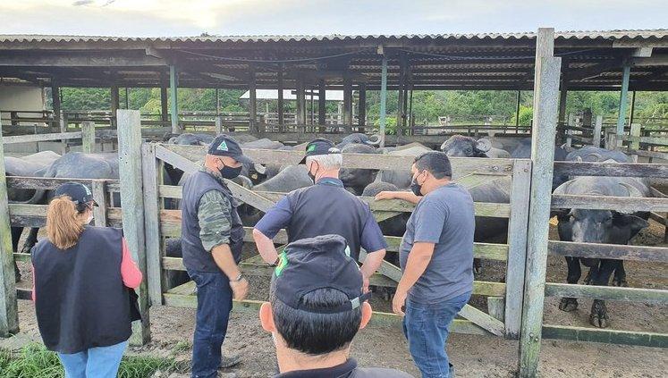 Superintendente da Suframa visita Fazenda Experimental da Ufam